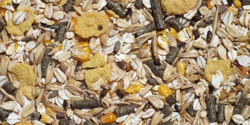 расторопша овес очищение печени будь здоров отзывы